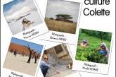 Expo des membres de la Focale 91 de Villiers sur Orge les 11 & 12 novembre 17