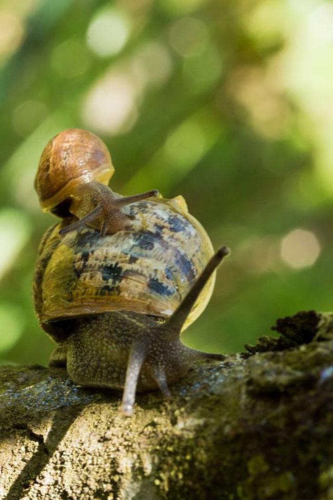 """3ème : """"Escargots"""" d'Isabelle Drouet"""