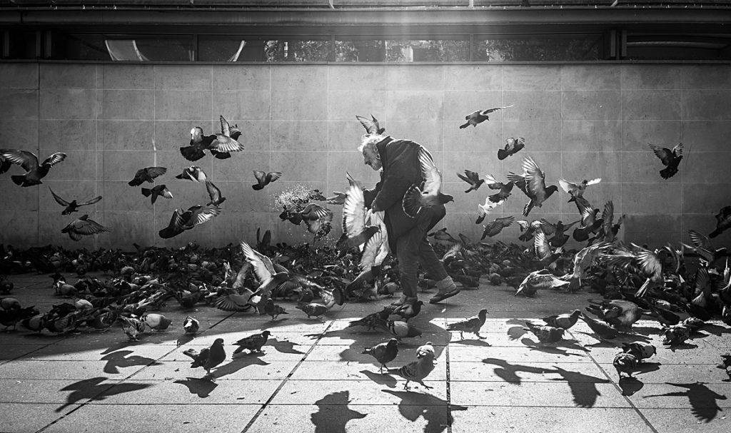 """1er Prix du Public : Cyrille Heurlié / CPO Orsay - """" banquet de pigeon """""""