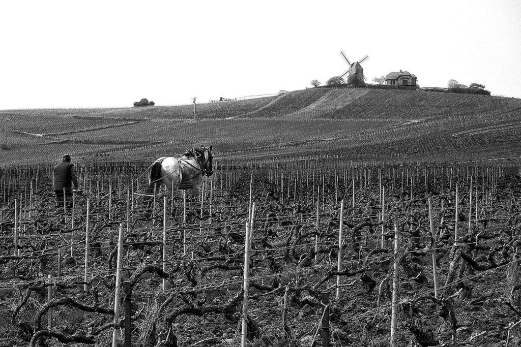 """2ème prix du public n&b : """"travail de la vigne"""" - Joëlle Lecoarer / PC La Norville"""
