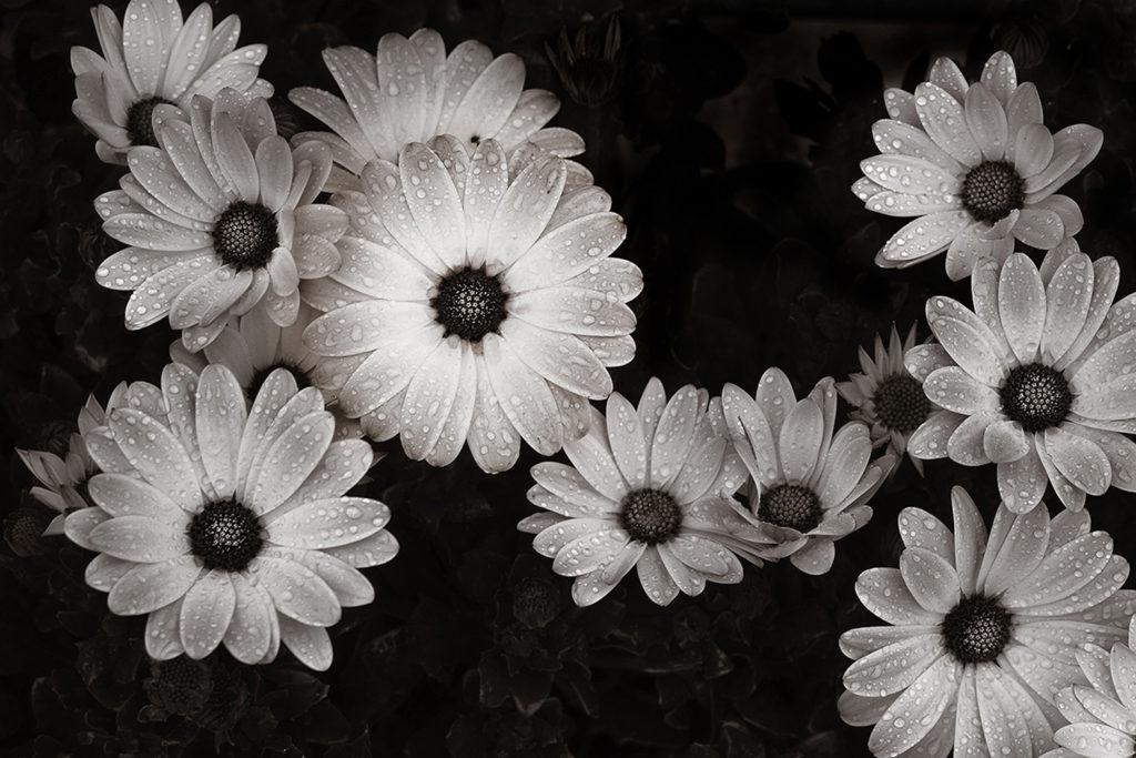 """Prix de l'Agglo. Coeur d'Essonne monochrome : """"Fleurs"""" de béatrice Moley / La Norville"""