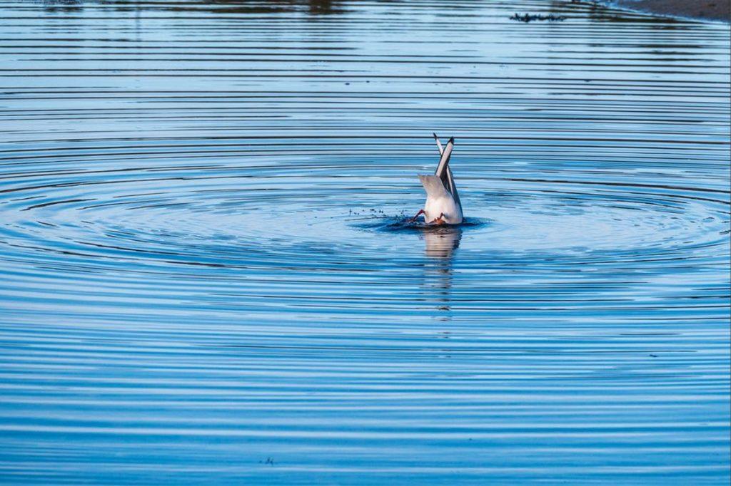 La fête dans l'eau