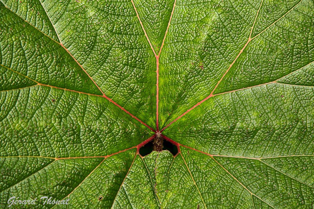Structure végétale
