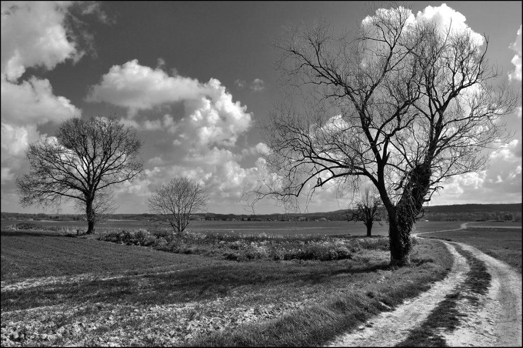 les 2 arbres