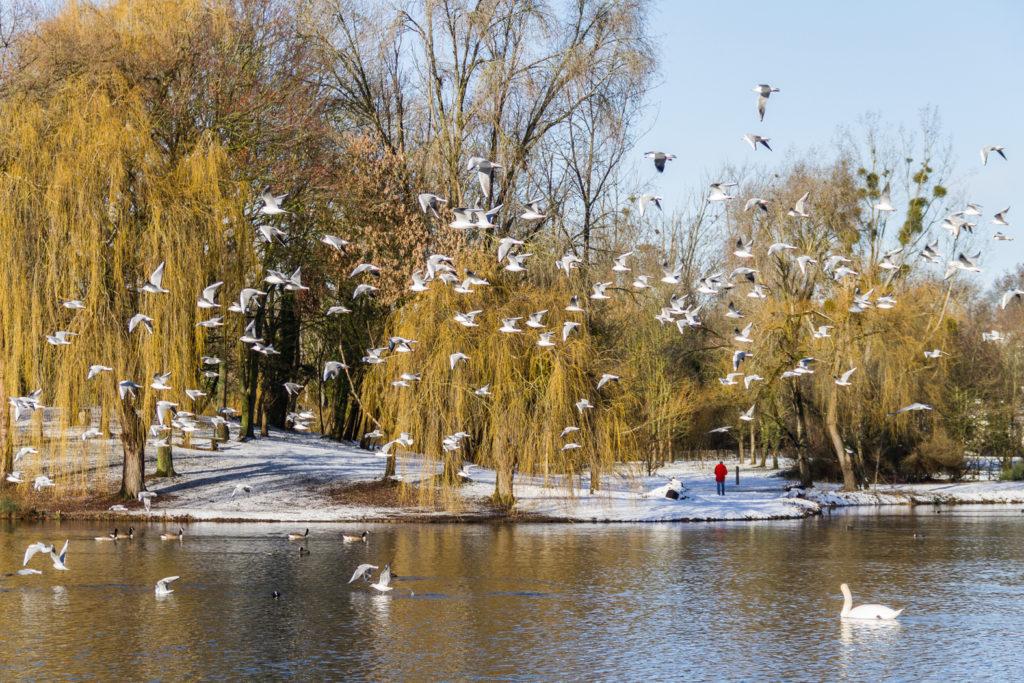 2ème prix jury couleur : « lac en hiver »,Marie-Jo Esbelin, Ballainvilliers