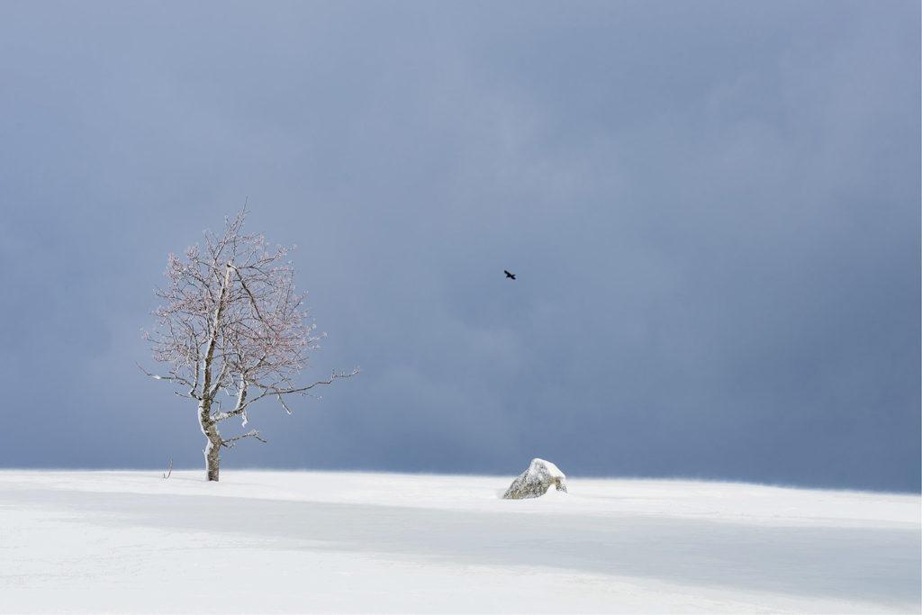 Coup de cœur : « L'oiseau dans le froid » de Stéphane GISSINGER / Photo Club Draveil